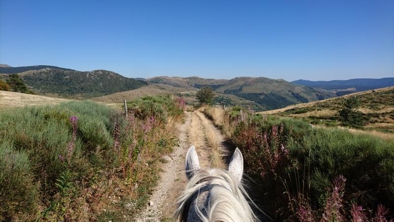 rando cheval 2016 8