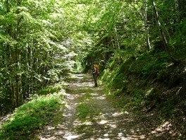 sous-bois-massif-de-laigoual-vers-la-col-de-la-seyrrerede-264x198