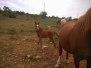 Jamiroquai Del Quinta