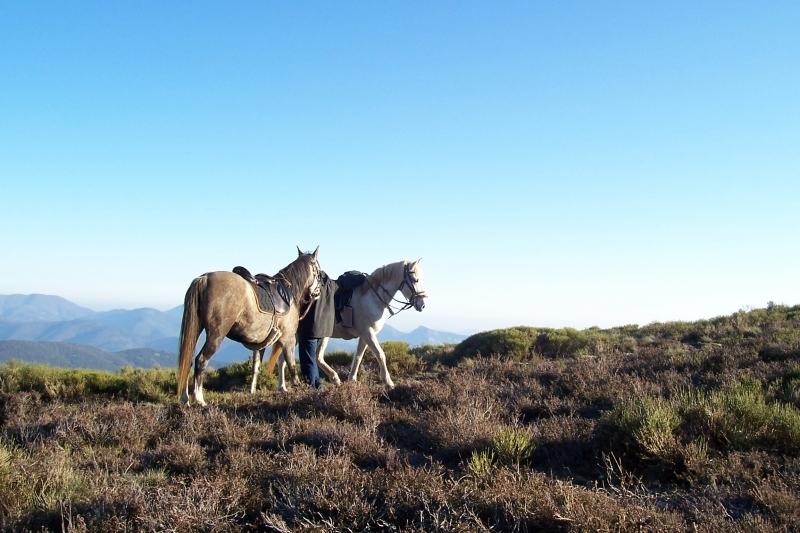 rando-cheval-2006-1
