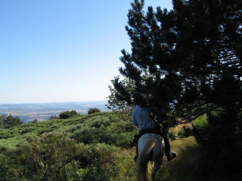 rando-cheval-2007-1