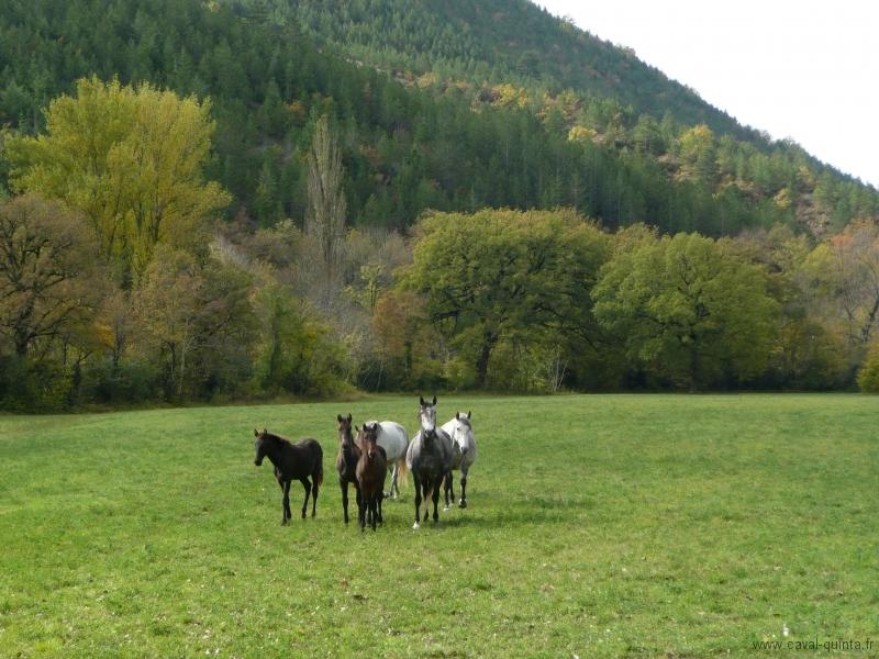 rando-cheval-2008-6