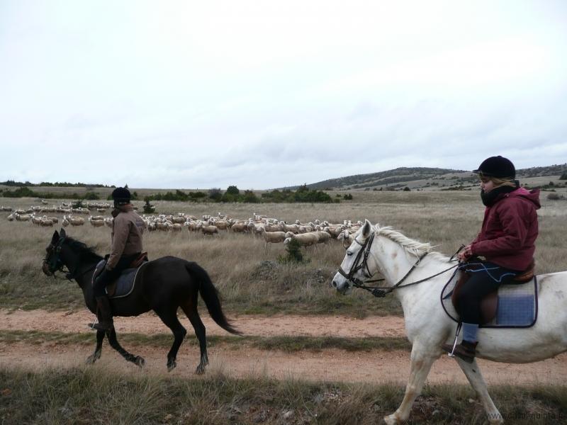 rando-cheval-2008-9