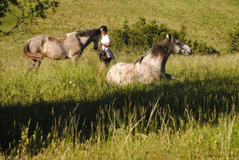 rando-cheval-2010-13