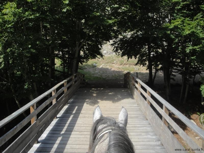 rando-cheval-2010-6