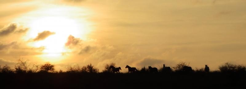 Randonnée à cheval 2014