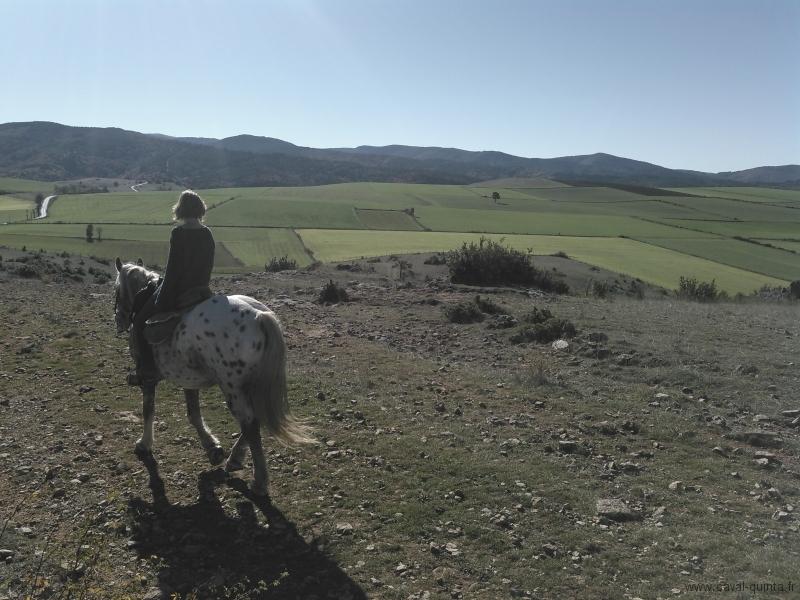 rando-cheval-2015-13