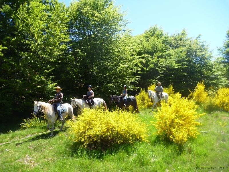 rando-cheval-2011-11