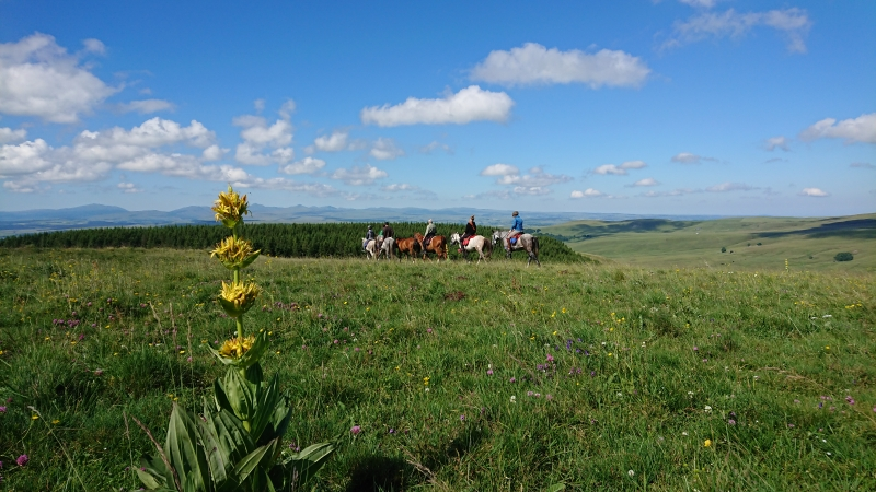 randonnee cheval cevennes auvergne 2018  (24)