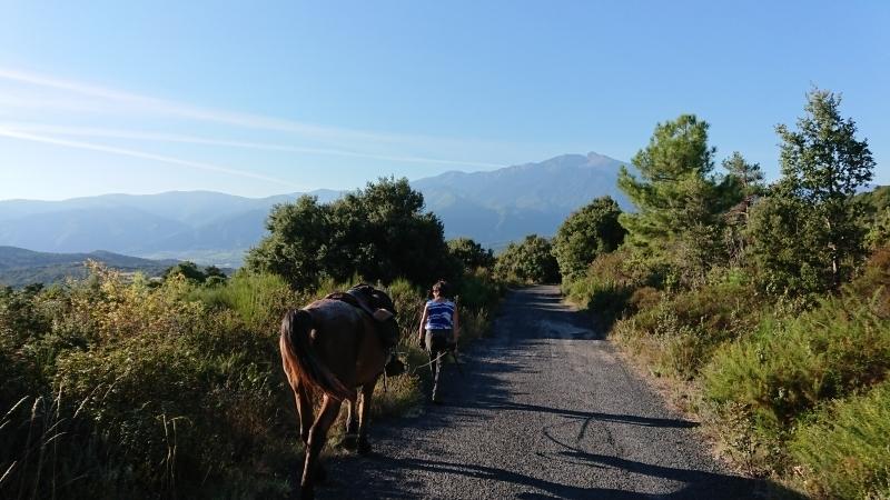randonnee cheval cevennes canigou 2018  (14)