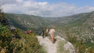 randonnee cheval cevennes 2018 (3)