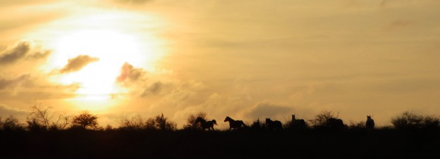 chevaux au communal de blandas