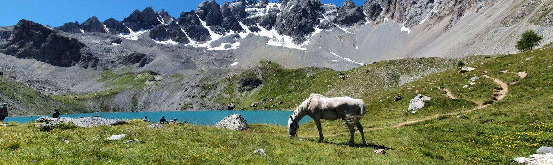 randonnée cheval voyage cheval